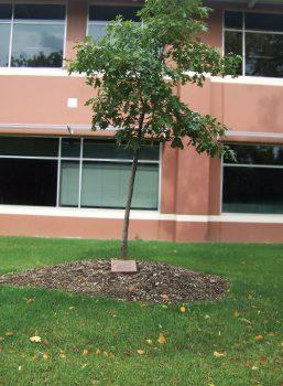 Example memorial tree